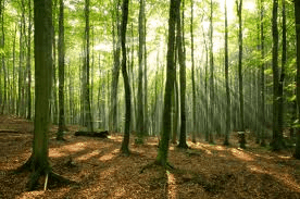 Can't see see the wood for the trees? Counselling can help.